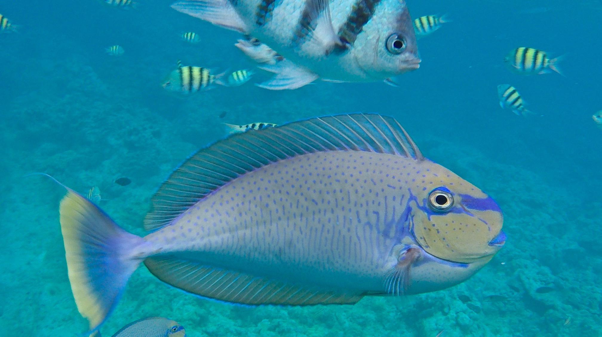 So lieben wir Fisch am meisten. Tropische Fische am Gun Beach, Guam.