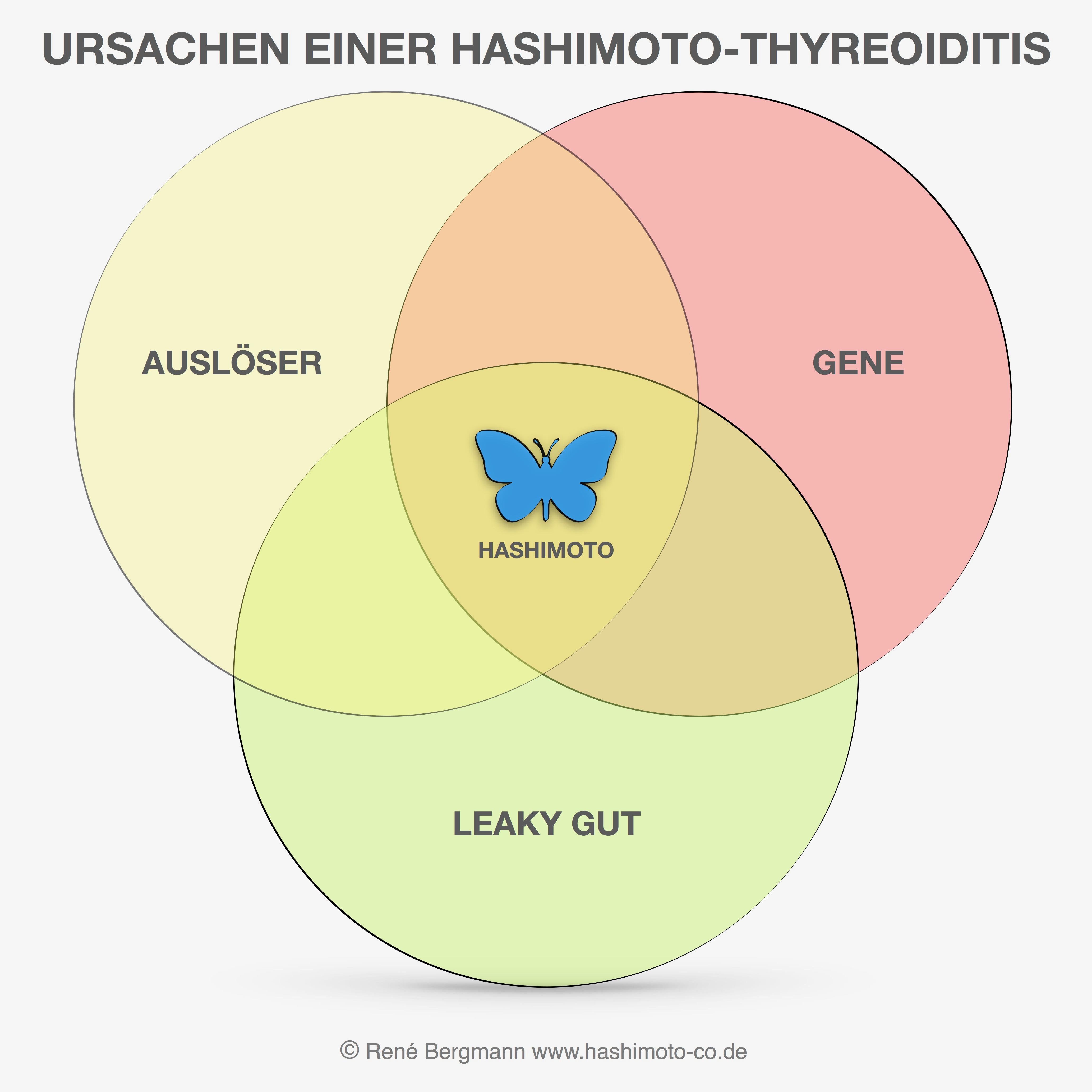 Autoimmunerkrankungen wie Hashimoto basieren auf 3 grundlegenden Ursachen. Nur wenn alle Faktoren zusammentreffen wird die Erkrankung ausgeprägt.