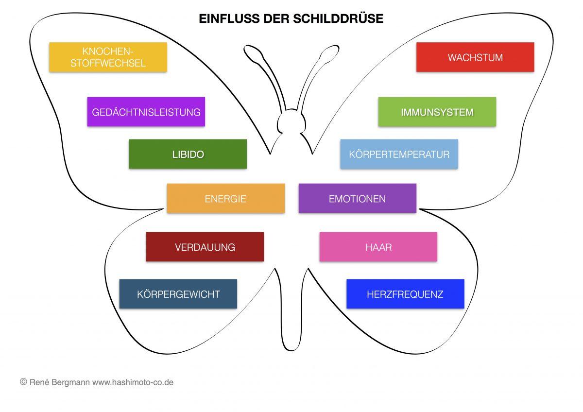 Hier ist ein Schema zum Einflussbereich der Schilddrüse abgebildet.