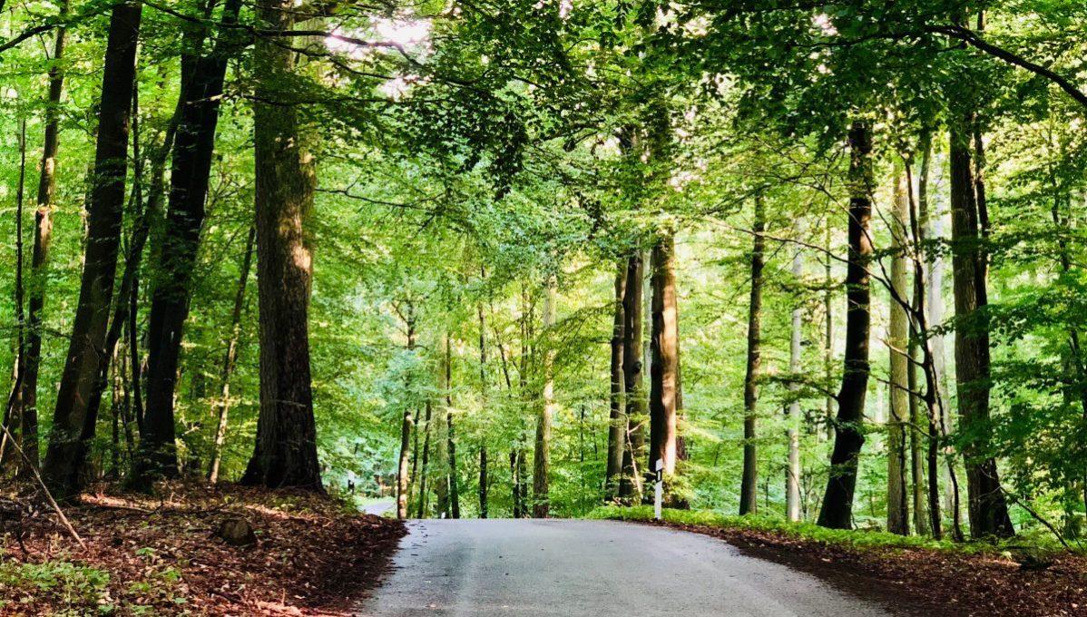 Die Anfahrt zur Gourmet Manufaktur Gut Klepelshagen führt durch den Naturpark »Am Stettiner Haff«.