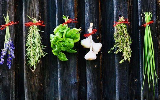 Immunsystem stärken Teil 1 Ernährung